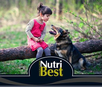 Pienso Para Perros Nutribest
