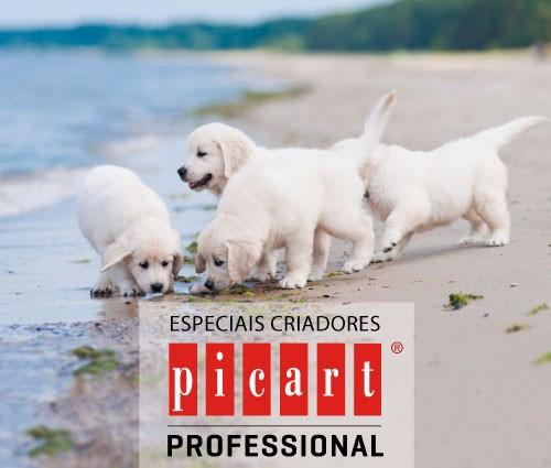 picart-pro-pt