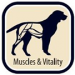 MUSCLES AND VITALITY: