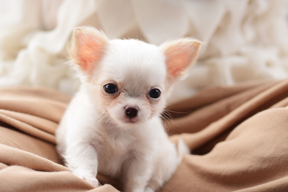 Pienso Para Cachorros