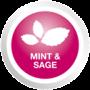 MINT & SAGE