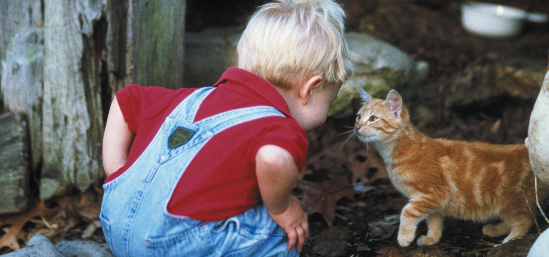 alimento para gatos Picart