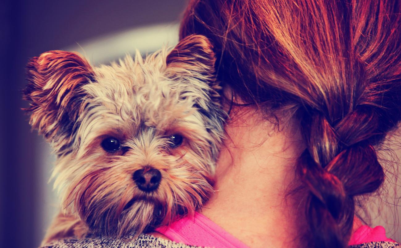 Por Qué Tener Perro