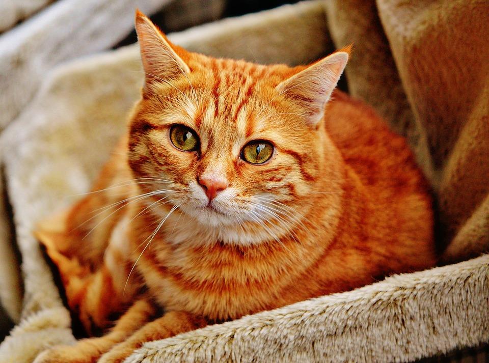 Causas De La Obesidad En Gatos