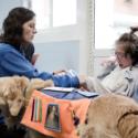 ¿Sabías Que Los Perros Predicen Ciertas Enfermedades Como El Cáncer O La Epilepsia?