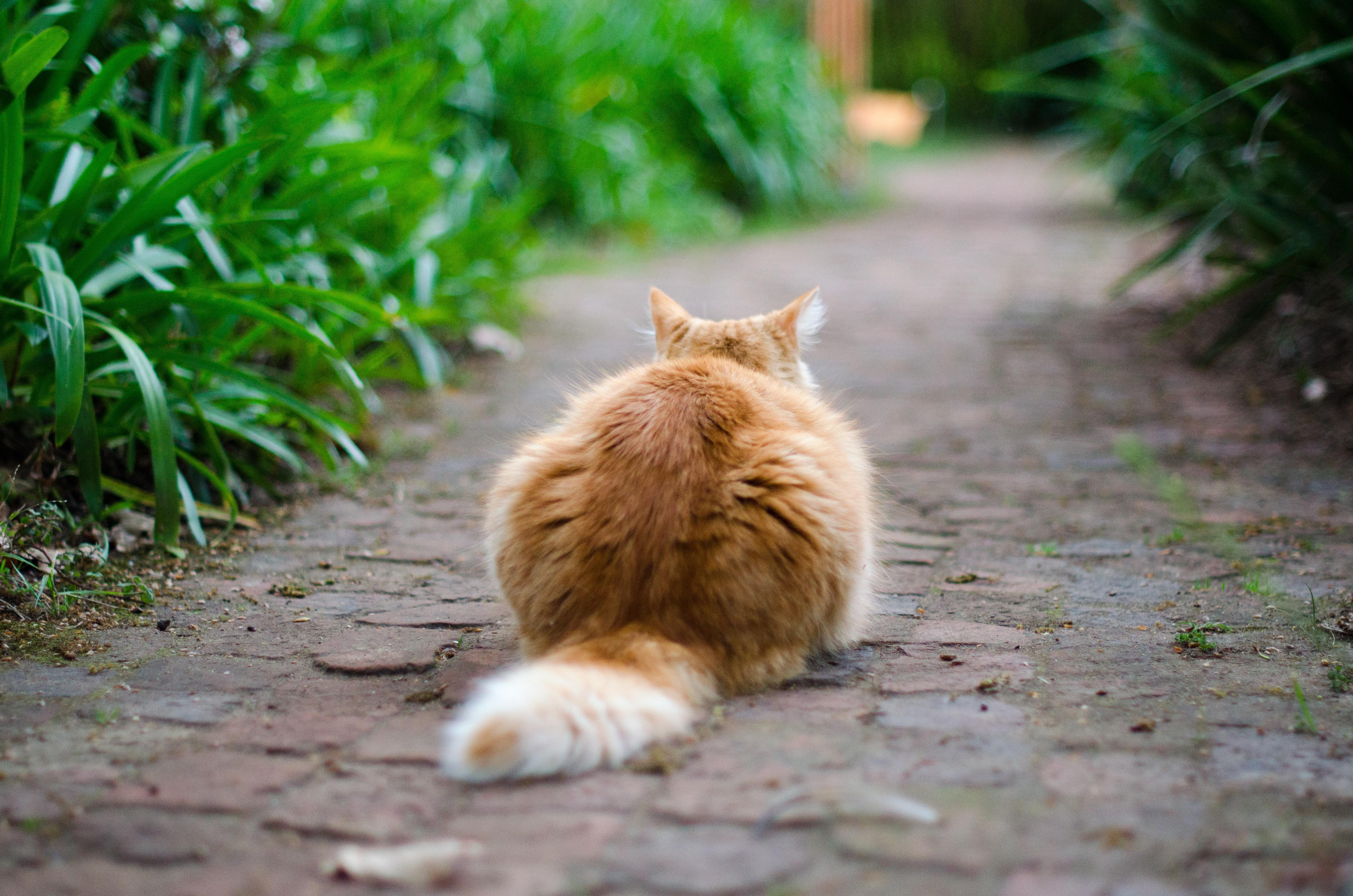 ¿Tu Gato Está Esterilizado?