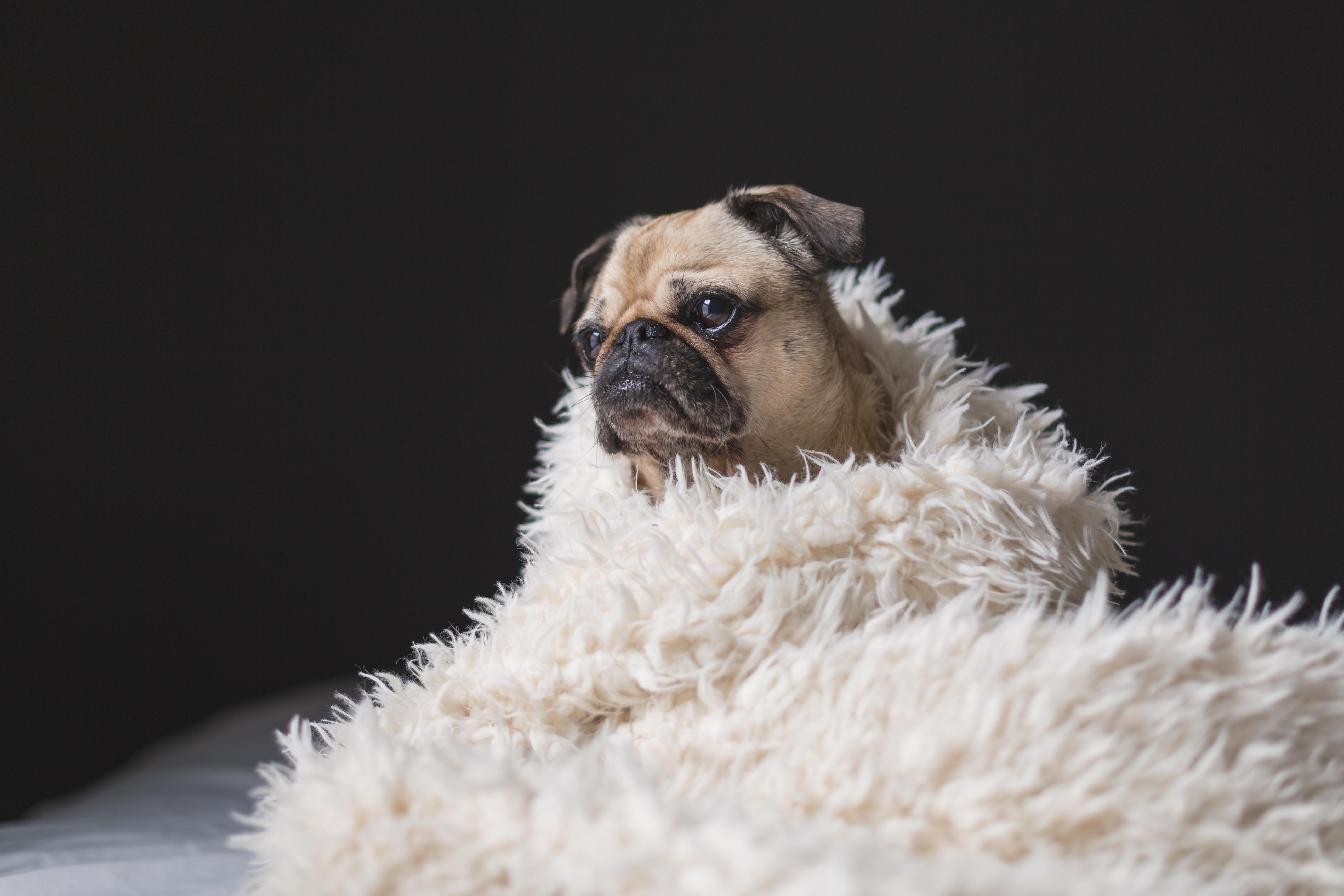 Prevenir La Obesidad En Perros