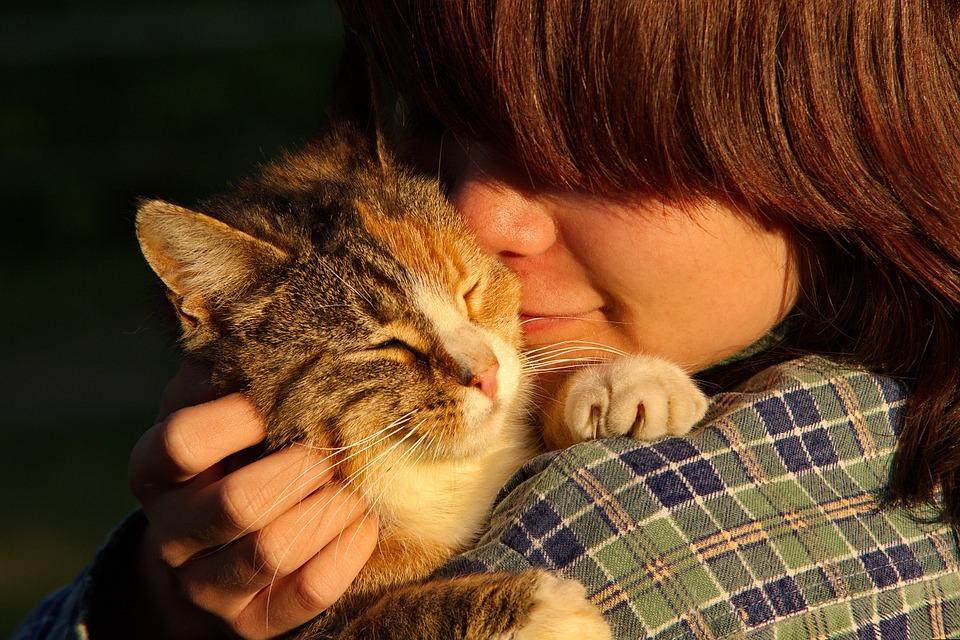 ¿Cómo Influye La Alimentación En La Piel Y El Pelo De Nuestros Perros Y Gatos?