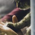 ¿Cómo Elegir La Mejor Alimentación Para Gatos?