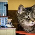 ¿Cómo Influye La Música En Los Gatos? Descubre Más En El Blog De #PicartPetcare