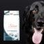 ¿Qué Son Las Alergias Alimentarias En Perros? ¿Cómo Tratarlas?