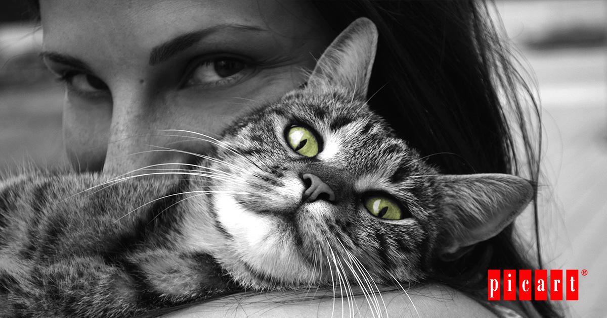 ¿Cuándo Empezó La Convivencia Entre Gatos Y Humanos?