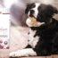 ¿Cómo Solucionar Las Digestiones Delicadas O Problemas Gastrointestinales Leves De Mi Perro?
