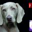 ¿Pueden Los Perros Tener Problemas En La Piel?