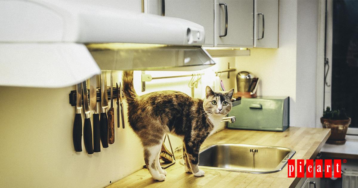 ¿Cómo Cambiar La Alimentación A Nuestro Gato?