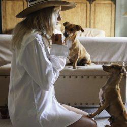 Hoteles Pet Friendly: La Mejor Opción Para Tus Vacaciones.