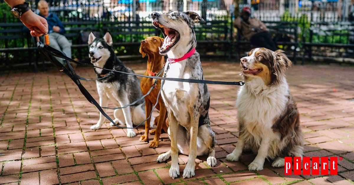Perros Raza Necesidades Especiales