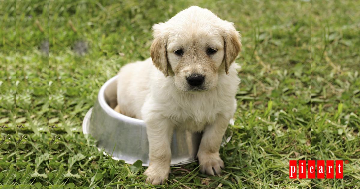 ¿Por Qué Un Cachorro Necesita Una Alimentación Especial?