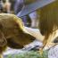 Cómo Alimentar A Un Perro Senior