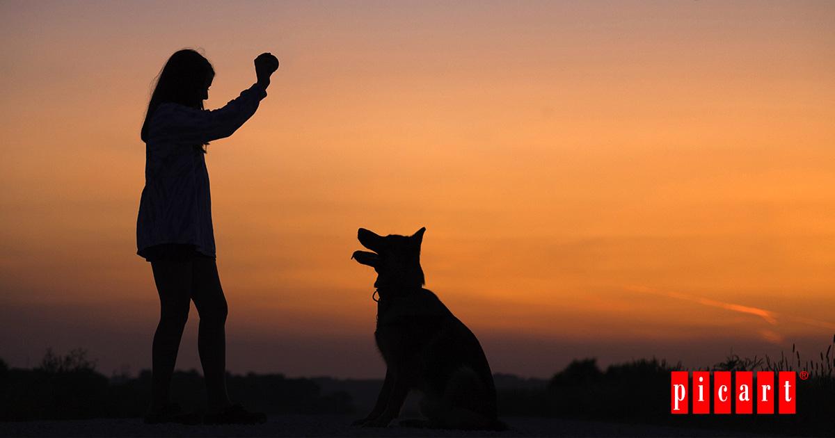 ¿Cómo Educar A Tu Perro?