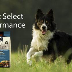 Alimentación Para Perros Con Una Elevada Actividad
