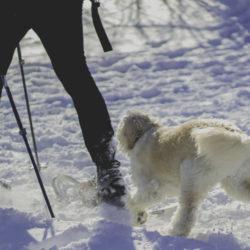 4 Consejos Para Mantener A Tu Perro En Forma