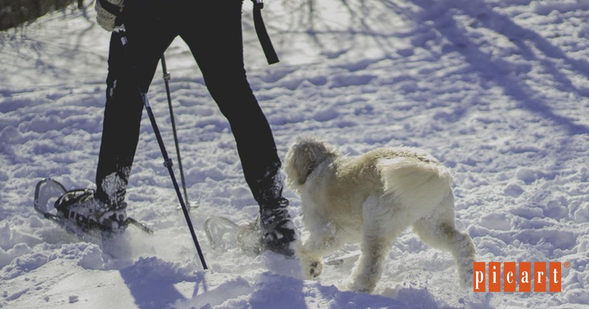 Consejos Para Mantener A Tu Perro En Forma