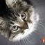 Beneficios De Una Alimentación Sin Cereales Para Gatos