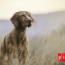¿Cuál Es La Mejor Manera De Proteger El Sistema Inmunológico De Tu Perro?