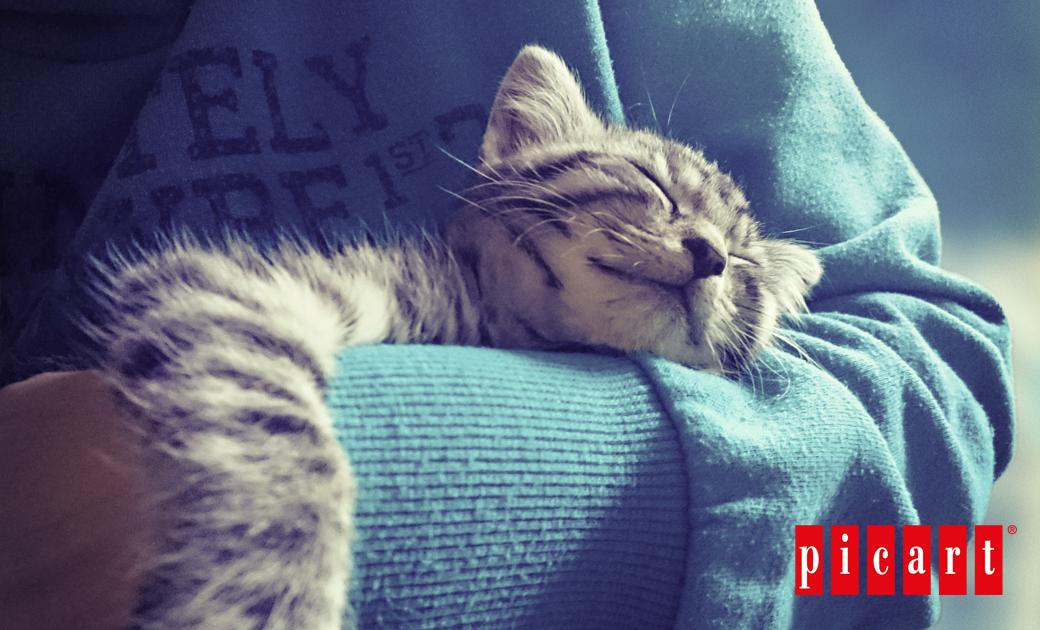 ¿Quieres Ser Voluntario En Una Asociación Protectora De Animales?