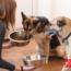 ¿Tienes Dos Perros En Casa? Consejos Para Una Buena Convivencia