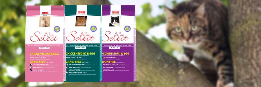 select cat
