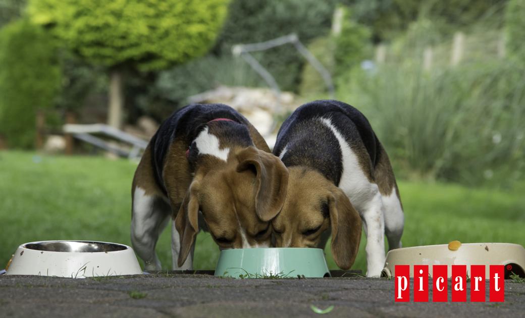 ¿Sabías Que Una Buena Alimentación Puede Reducir La Caída Del Pelo De Tu Mascota?