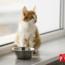 ¿Cuántas Veces Al Día Come Un Gato?