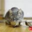 ¿Por Qué Mi Gato No Come?