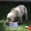 ¿Alguna Vez Te Has Preguntado Cómo Debes Racionar La Comida A Tu Perro?
