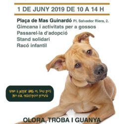 Picart Petcare Col·labora Amb La Fira Animalis I La Seva Gimcanina