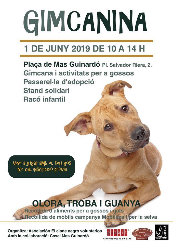Picart Petcare Colabora Con La Feria Animalis Y Su Gimcanina