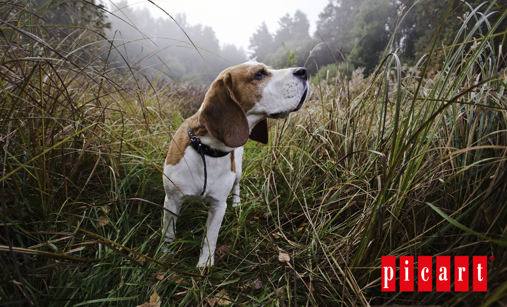 La Esterilización En Perros Y Consejos De Alimentación