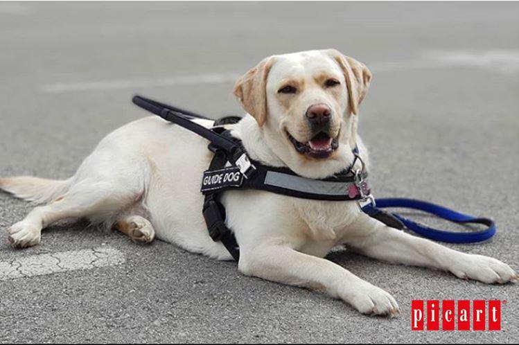 ¿Cómo Ayudan Los Perros De Terapia A Niños Autistas Y Con TDAH?