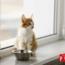 ¿Qué Son Y Cómo Combatir Los Cálculos Renales En Gatos Con La Alimentación?