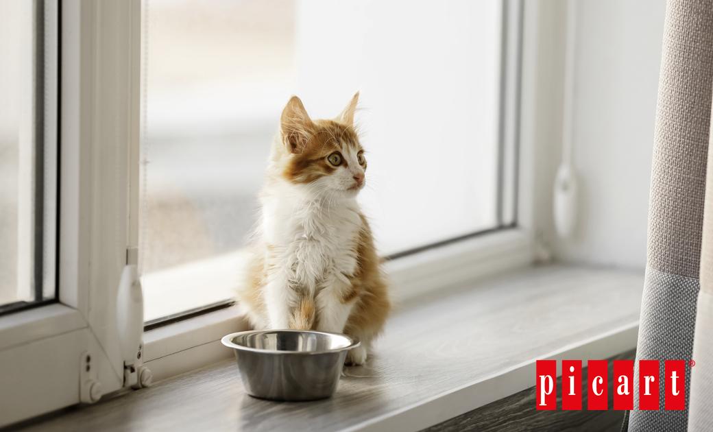 Qué Son Y Cómo Combatir Los Cálculos Renales Urinarios En Gatos Con La Alimentación