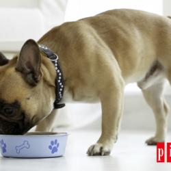 ¿Por Qué Le Conviene A Tu Perro La Alimentación Picart Select Grain Free?
