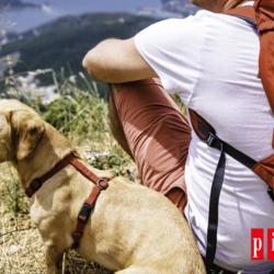 El Kit Esencial De Primeros Auxilios Para Perros En Viajes Y Excursiones