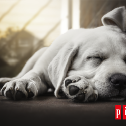 ¿Cómo Conseguir Que Tu Perro Descanse Bien?