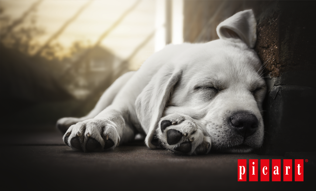 Cómo Conseguir Que Tu Perro Descanse Bien
