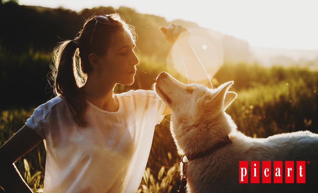 Consigue La Mejor Relación Con Tu Perro Mediante Una Educación En Positivo