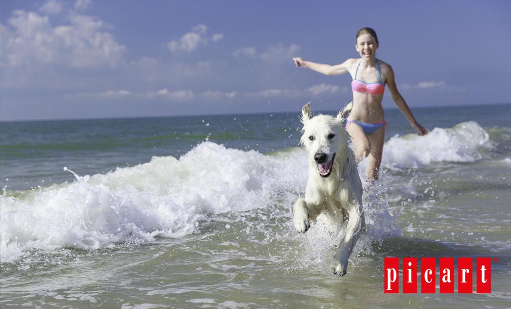 Consejos Para Disfrutar De Un Día De Playa En Compañía De Tu Perro