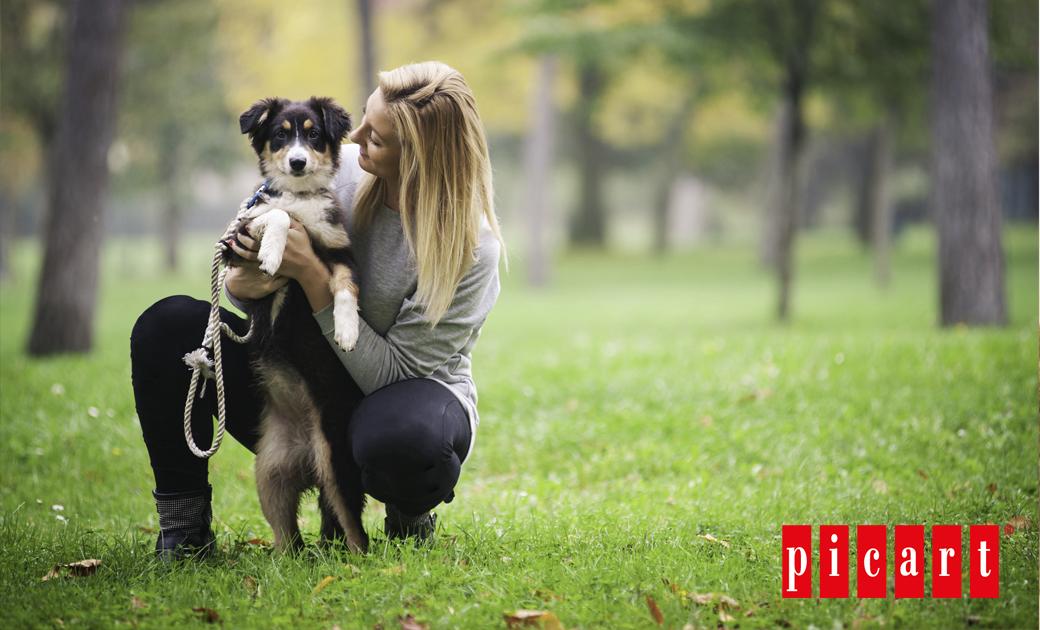 Todo Lo Que Debes Saber Antes De Adoptar Un Perro Pastor