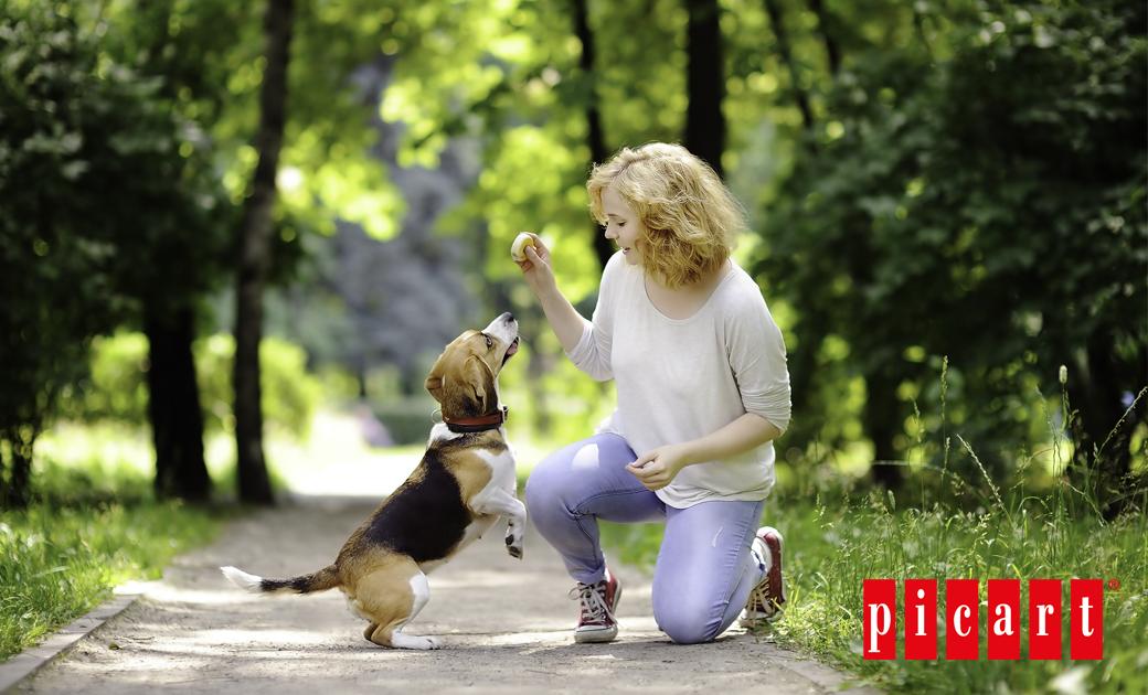 Los Paseos, Una Actividad Diaria Y Necesaria Para Nuestros Perros